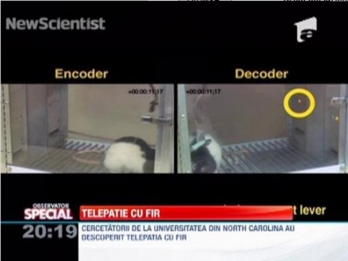 Cercetatorii americani au inventat telepatia cu fir!