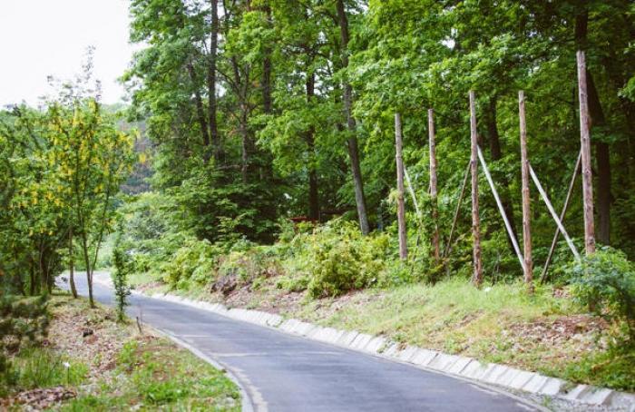Inedit! România are un parc cu arbori de POVESTE