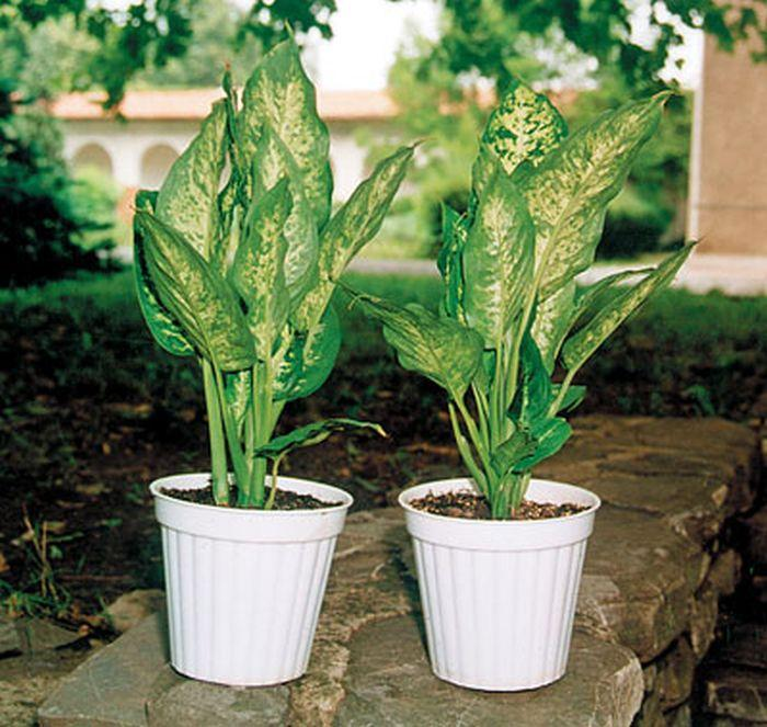 O plantă pe care o avem în case poate UCIDE UN COPIL într-un minut!