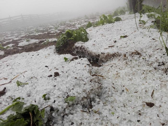 Imaginile prăpădului la Cluj. Culturi întregi, distruse de o ploaie cu gheaţă care aproape a acoperit pământul
