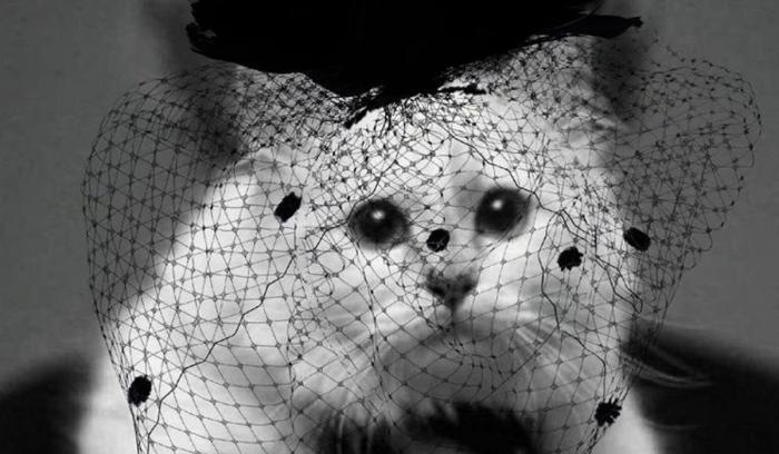 Pisica lui Karl Lagerfeld, în doliu pe Instagram: 'Am inima frântă'