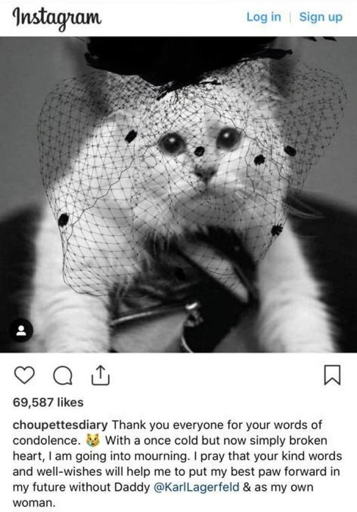 Pisica milionară a lui Karl Lagerfeld, în doliu pe Instagram