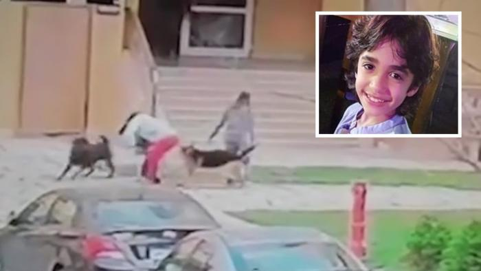Femeia apără copilul în fața câinilor