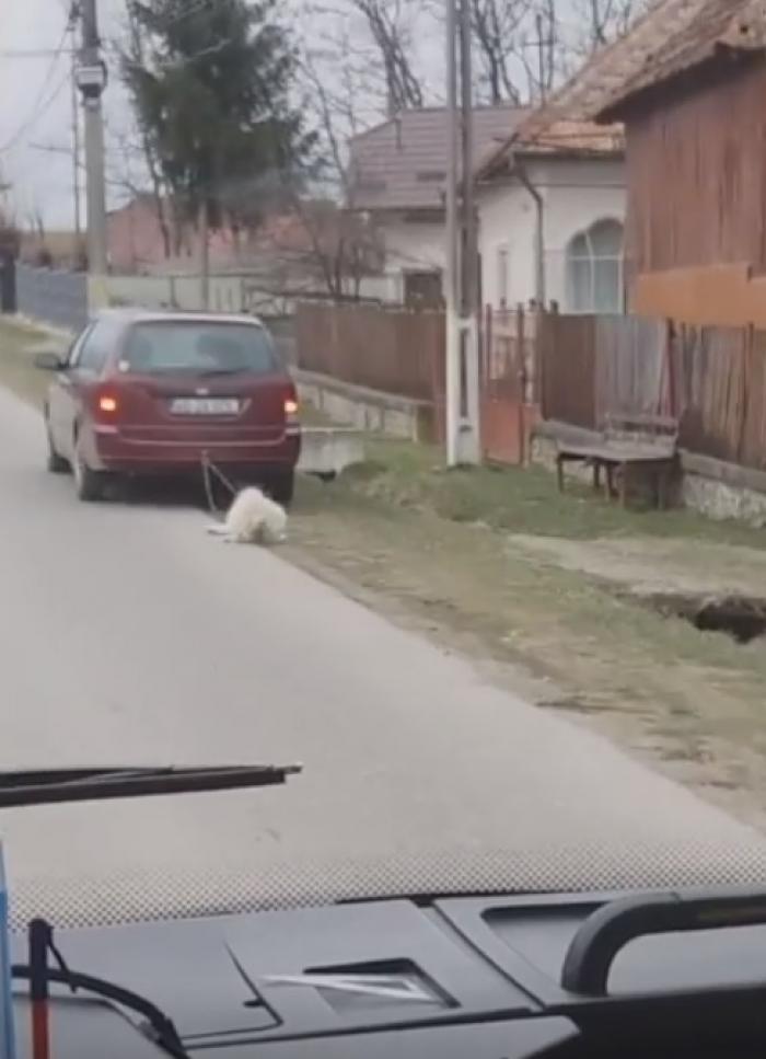 Un câine legat de maşină e târât pe şosea, într-o comună din Argeş (video)