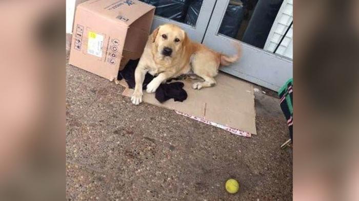 Câinele așteptând la intrarea spitalului din Argentina