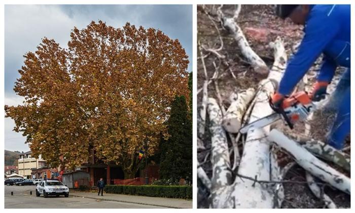 Arborele Anului 2019 în România sluțit dedrujbe la Câmpeni, sub privirile uluite ale localnicilor (Video)