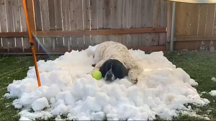 Un câine pe moarte primește acasă zăpadă adusă cu gălețile de la un patinoar, în SUA, înainte să fie eutanasiat