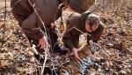 Imagini rare de la salvarea unui pui de tigru. Tigroaica așteaptă răbdătoare eliberarea puiului din capcană, fără să-i atace pe salvatori, în Rusia