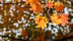 Vremea 28 octombrie. Temperaturile cresc uşor, iar cerul va fi mai mult senin. Noaptea rămâne în continuare friguroasă, cu minime şi de -10