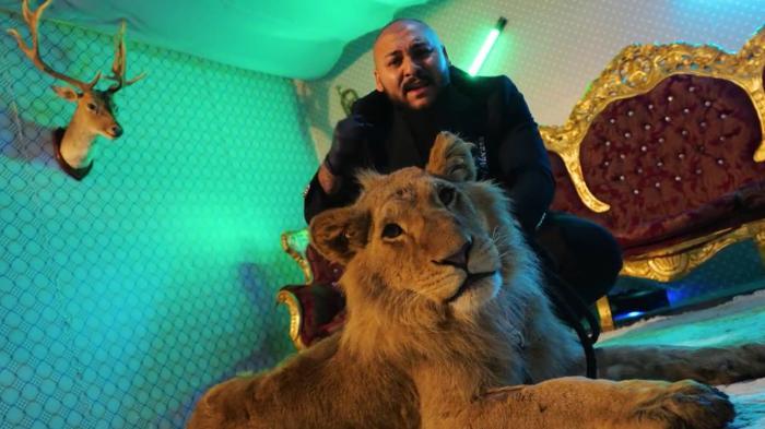 """Leul din videoclipul lui Dani Mocanu şi fraţii săi au ajuns în Olanda. Proprietar: """"Plâng de o săptămână de când i-am dat"""""""