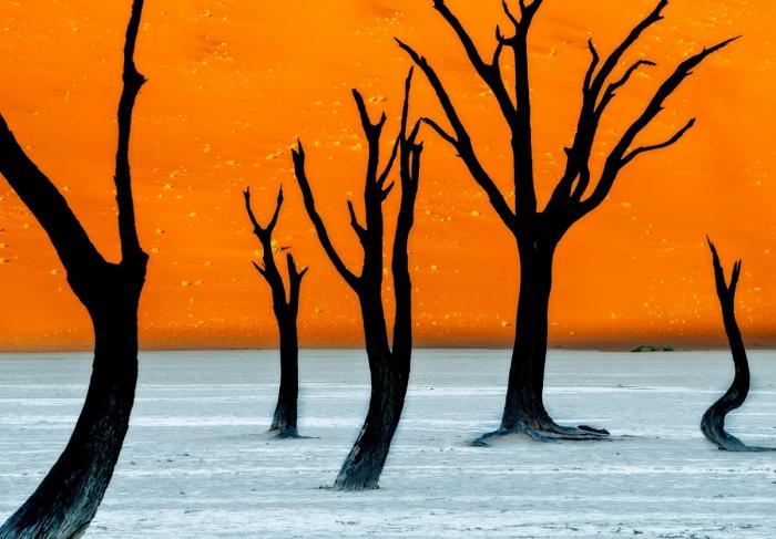 Copaci cu ramuri goale pe un fundal creat de dune de nisip