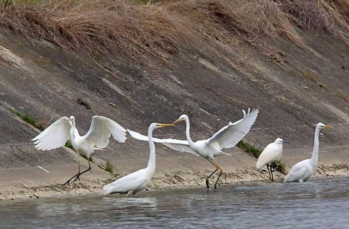 Imagini inedite surpinse pe Insuliţa Jiului. Mai multe specii de păsări şi-au făcut apariţia odată cu venirea primăverii