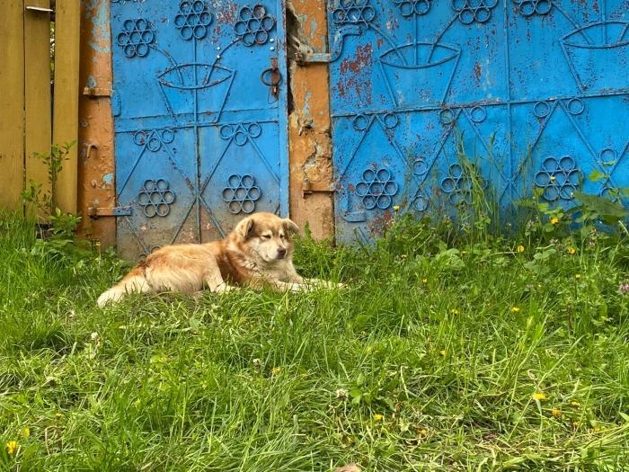 Fidelitate şi dincolo de moarte. Un câine din Iaşi îşi aşteaptă stăpânul mort să se întoarcă acasă