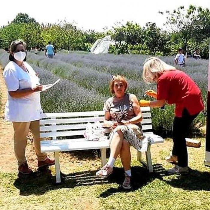Imagini impresionante în Timiș. Românii se pot vaccina în lanul de lavandă