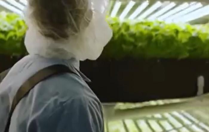 Cum vor arăta fermele viitorului? Plantele vor putea fi cultivate fără să fie nevoie de pământ sau de lumina soarelui