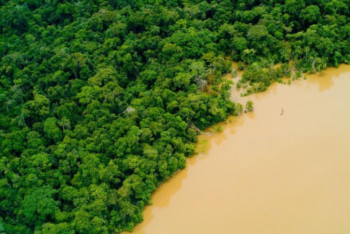 Imagini surprinse în pădurea Amazoniană