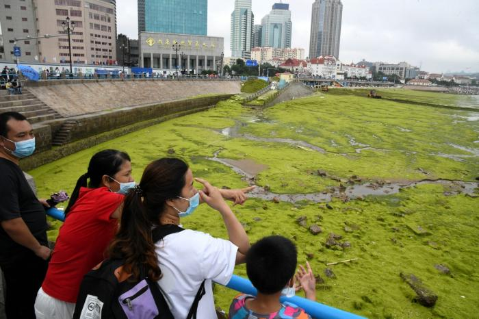 Portul chinez Qingdao invadat de alge