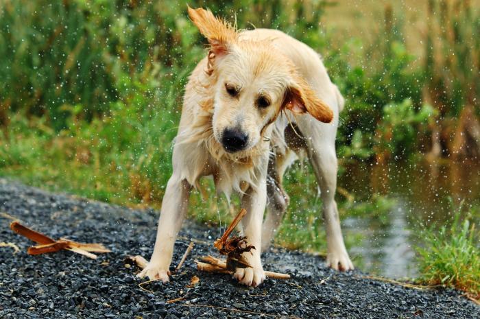 Un câine iese din apa unui râu