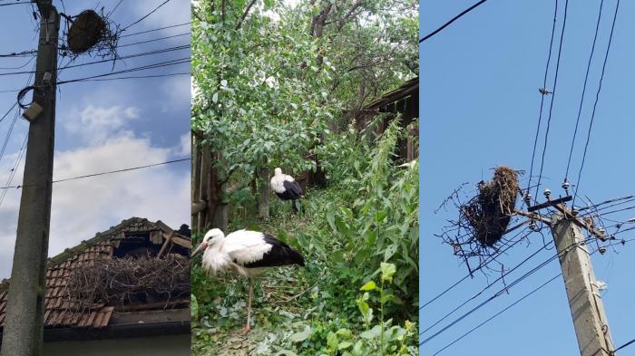 Cuibul unei berze a căzut peste acoperişul unei case