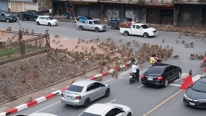 Zeci de maimuţe au blocat traficul într-un oraş din Thailanda, într-o dispută teritorială