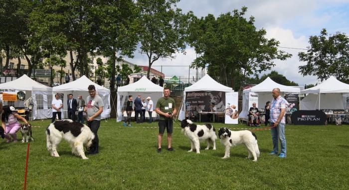 Zeci de câini de rasă s-au întrecut în frumusețe la Iași, la Animal Fest, iar juriul a dat verdictul final
