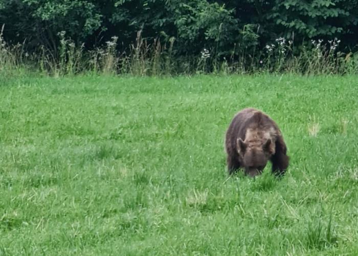 Cum va fi gestionată problema urşilor, după ce ministrul Mediuluia dat nas în nas cu unul, zilele trecute