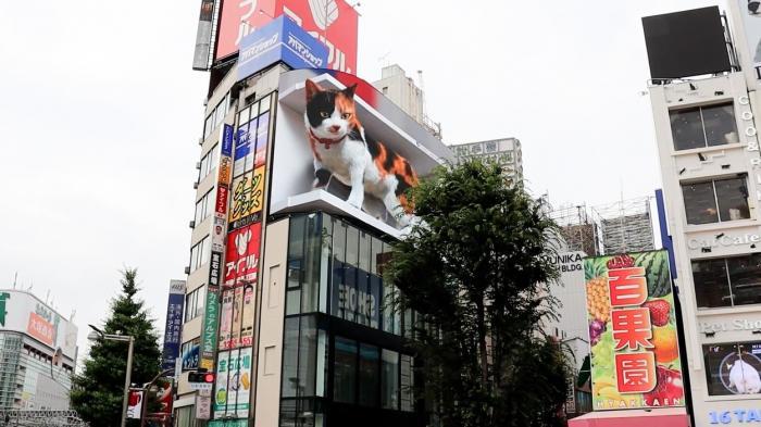 Panoul publicitar 3D cu o felină gigantică devenit atracţie turistică în Tokyo