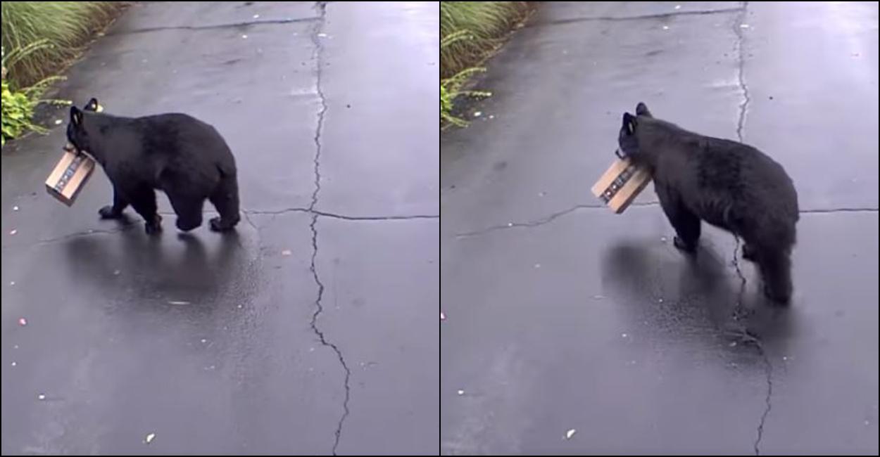 Ursul a luat coletul chiar din faţa uşii