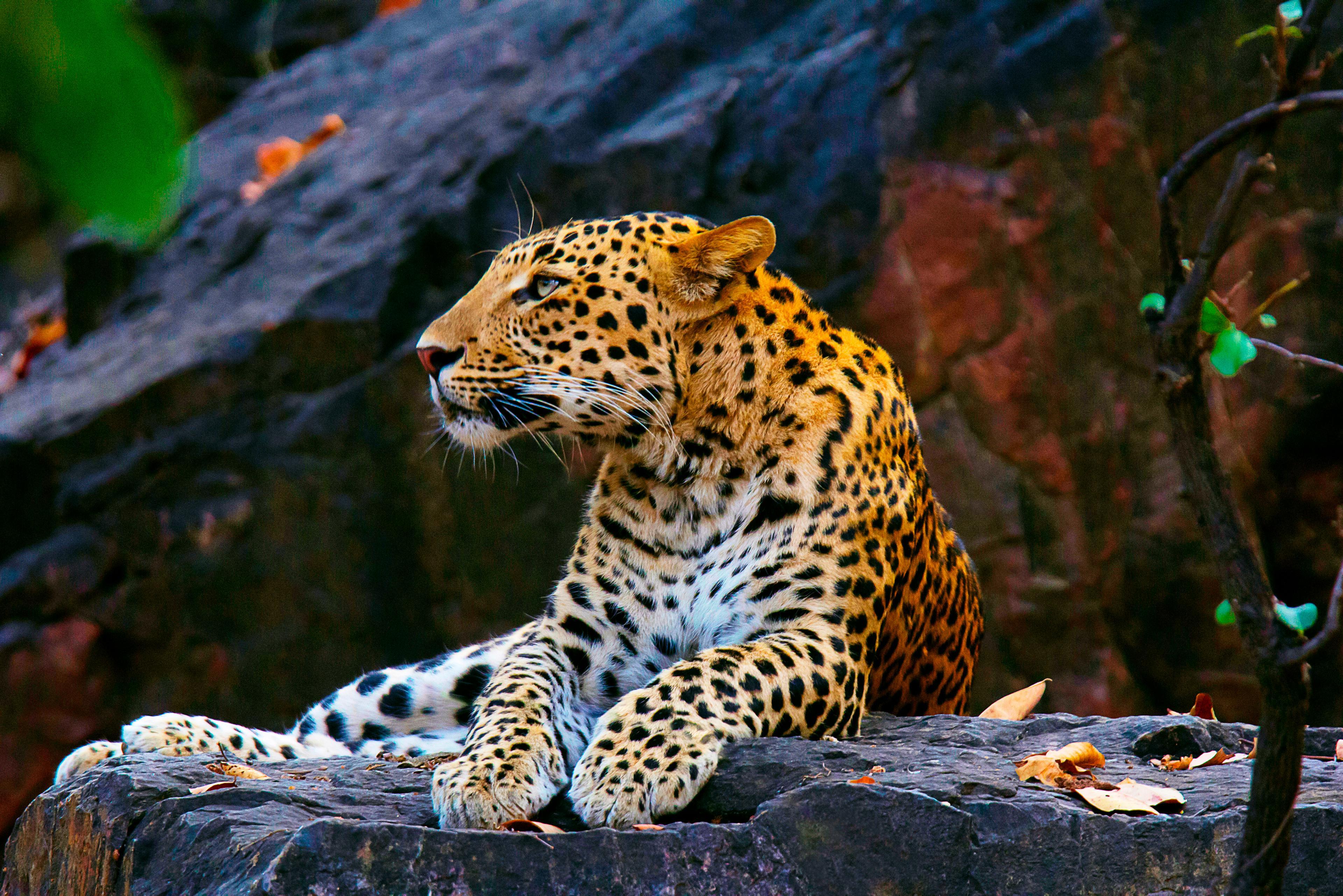 Un fotomodel a fost atacat și mușcat de cap de un leopard în timpul unei ședințe foto, în Germania