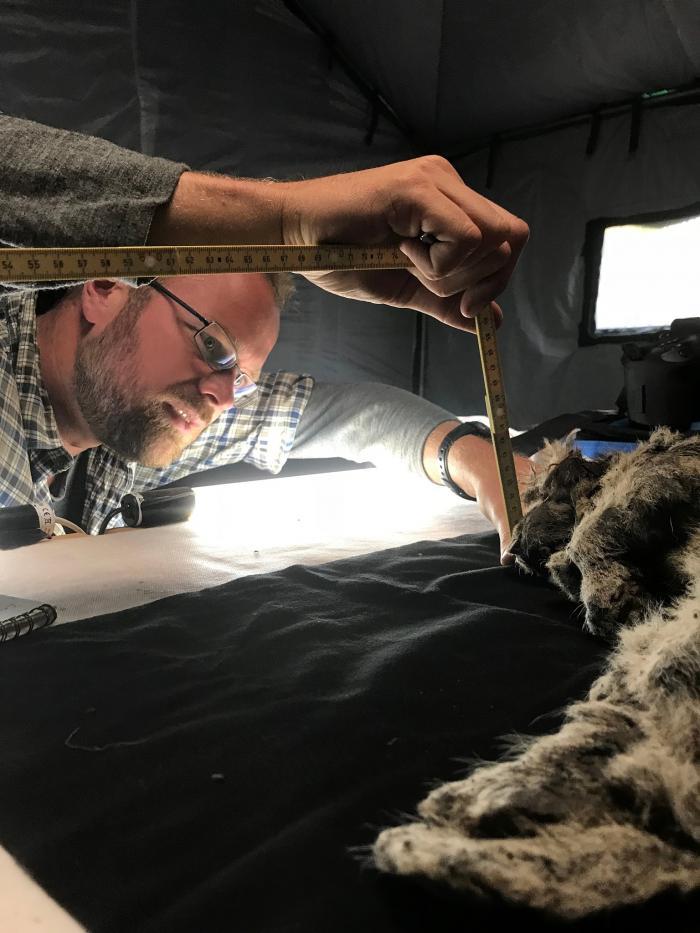 Puiul de leu are o vechime de 28.000 de ani