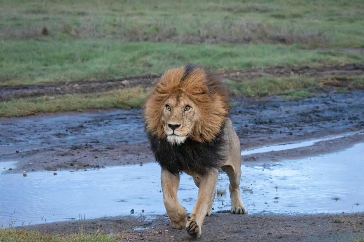 Trei copii au fost ucişi de lei