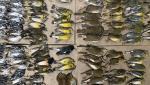 Imagini macabre pe străzile din New York. Sute de păsări au murit lovindu-se de zgârie-nori