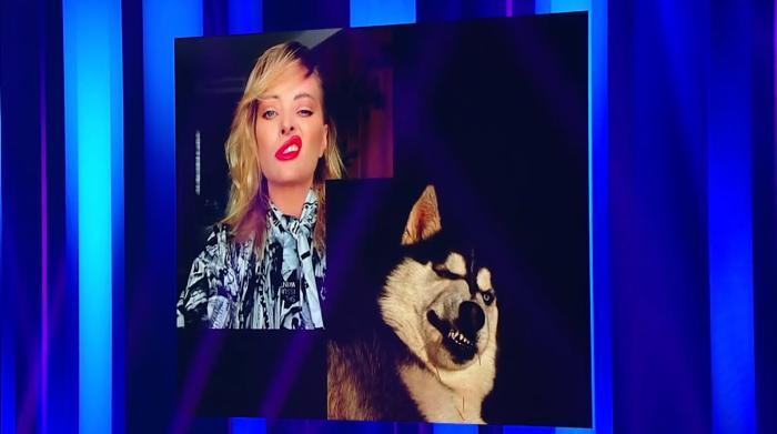 Sâmbătă, de la 20.00, la Antena 1: Un concurent crede că a găsit animalul de companie perfect pentru fiecare jurat iUmor