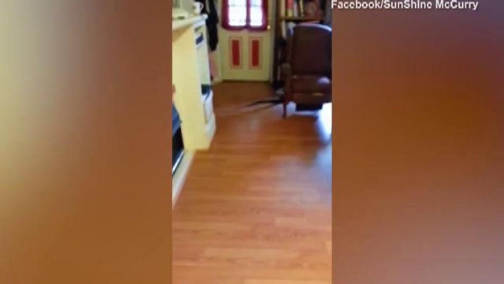 Curajul ei a devenit viral pe internet! O femeie a devenit vedetă în online, după ce a capturat un şarpe, care s-a strecurat în casa sa (VIDEO)