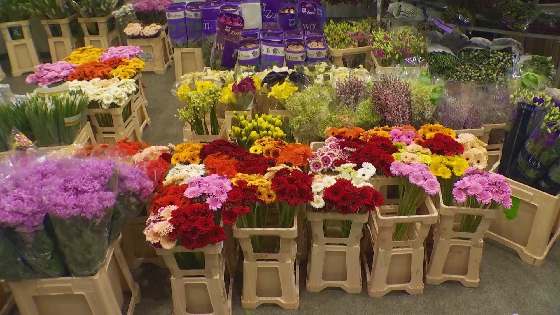 """Exclusiv: """"Wall Street-ul florilor"""", bursa din Olanda unde florile se vând în 5 secunde"""