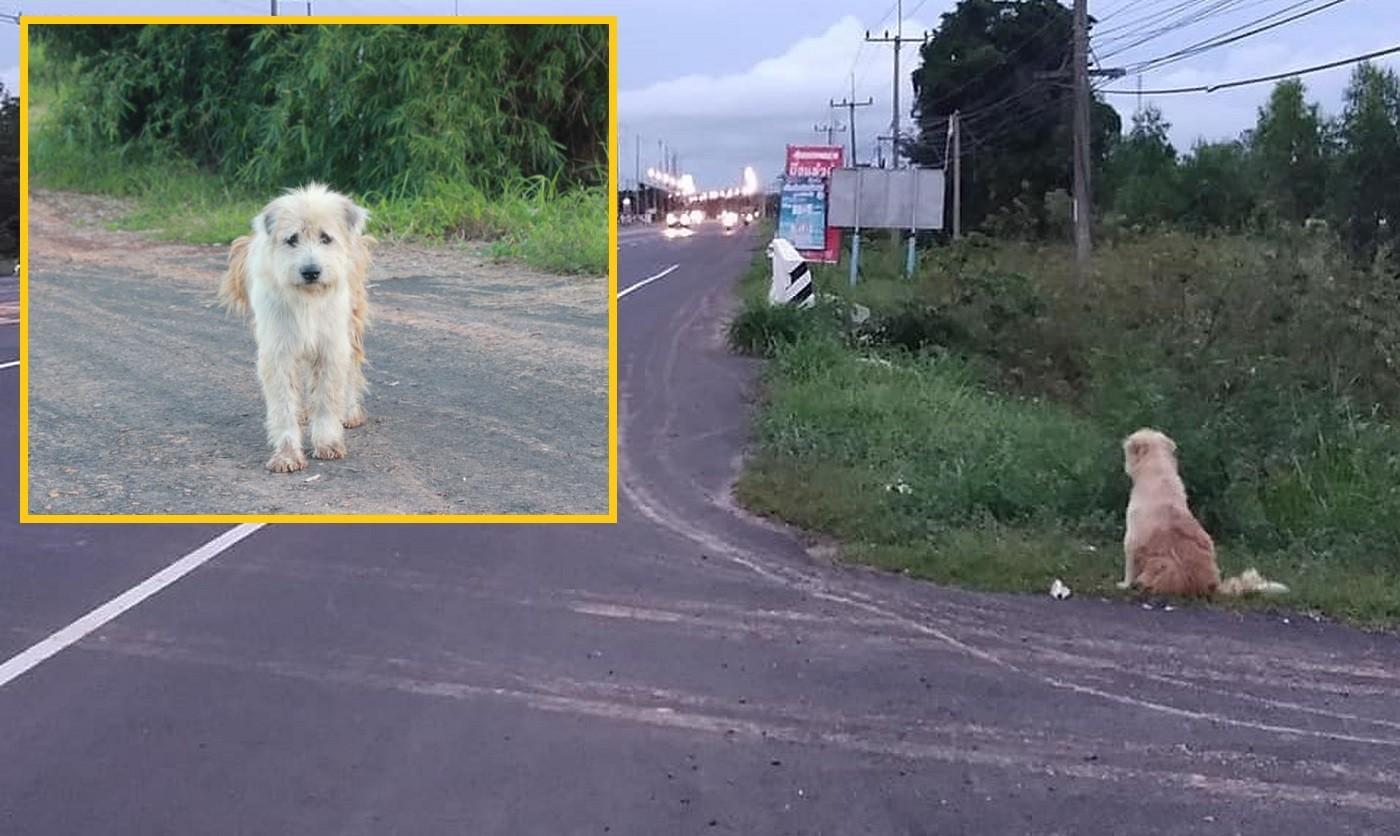 Un câine pierdut a așteptat 4 ani în același loc reuniunea cu stăpânii săi (Video)