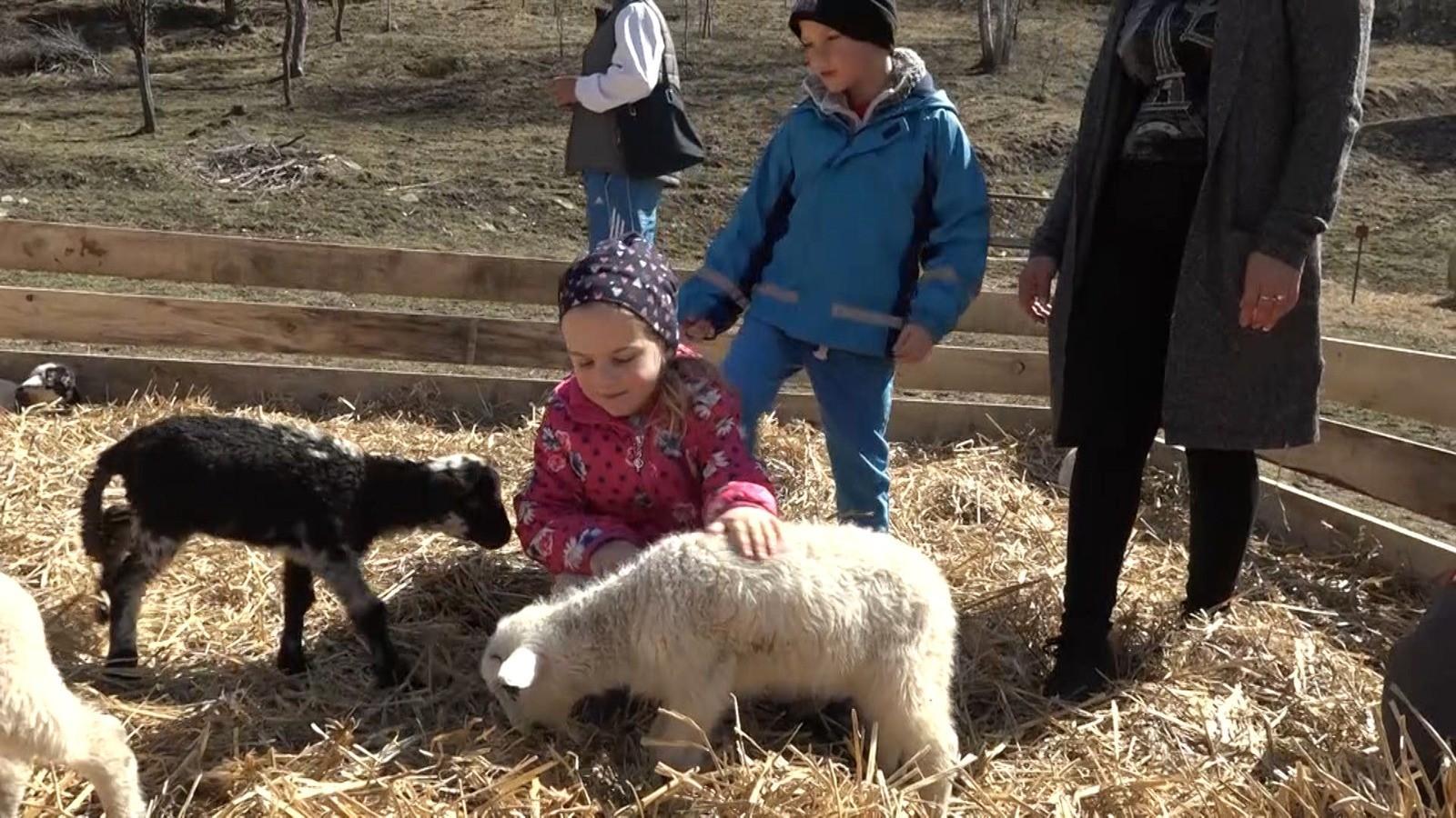 Raiul celor mici, într-un sat din Harghita. Copiii se pot juca și hrăni animalele pe care, cei mai mulți le-au văzut doar în cărți