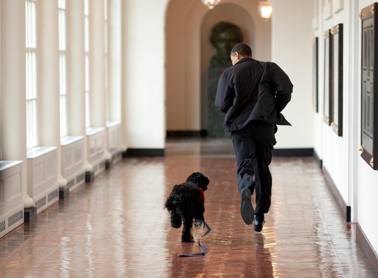 """A murit Bo, câinele familiei Obama. Barack Obama: """"A fost exact ce aveam nevoie și mai mult decât ne așteptam vreodată"""""""