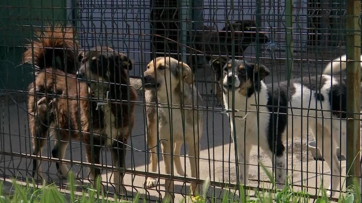 Directorul Direcţiei Publice Motru, acuzat că a susţinut eutanasierea câinilor comunitari