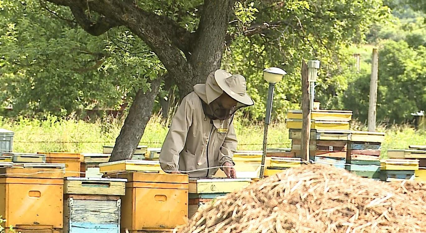 Ajutor pentru producătorii locali, loviți de pandemie. Miere de albine şi suc de mere, lângă corn şi lapte