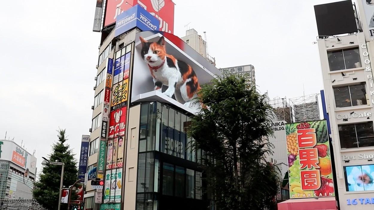 Un panou publicitar 3D cu o pisică gigantică a devenit o atracţie turistică în Tokyo - GALERIE FOTO