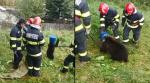 Pompierii din Predeal, chemați să salveze un pui de urs care avea capul prins într-un butoi
