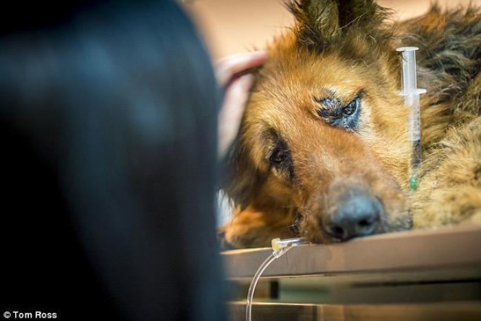 CRUZIME fără margini în Bucureşti: Un câine a fost MUTILAT în stradă: I s-a tăiat un picior şi i s-au smuls dinţii!