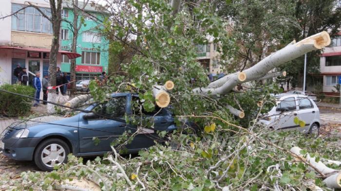 Bilanţ dezastruos în ţară: Furtunile au ucis oameni, au smuls copaci din rădăcini şi au doborât zeci de acoperişuri