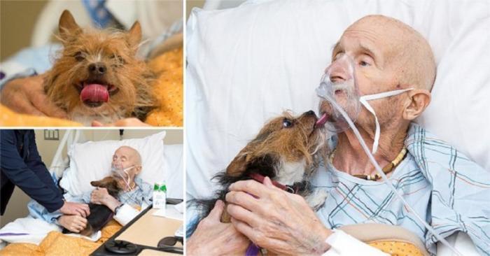 Unui veteran de război, aflat pe patul de moarte, i s-a respectat ultima dorinţă de a-şi mai vedea o dată câinele
