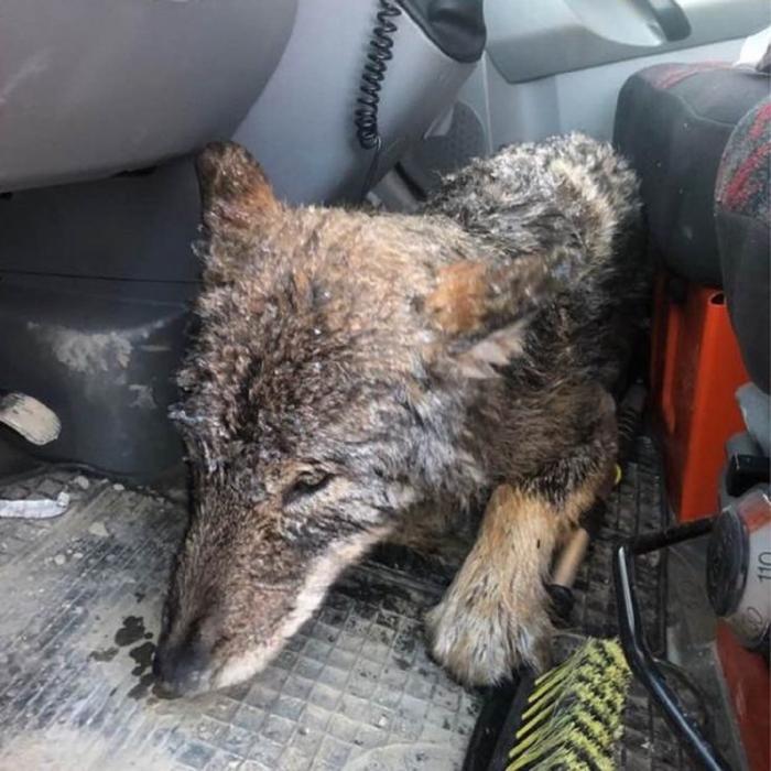 Animalul a adormit în maşină, pe picioarele unuia dintre bărbaţi