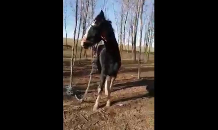 Cai, legaţi şi maltrataţi, în apropiere de Techirghiol
