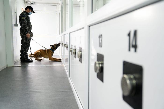 Demonstrație cu unul dintre câinii antrenați pentru depistarea persoanelor infectate cu coronavirus