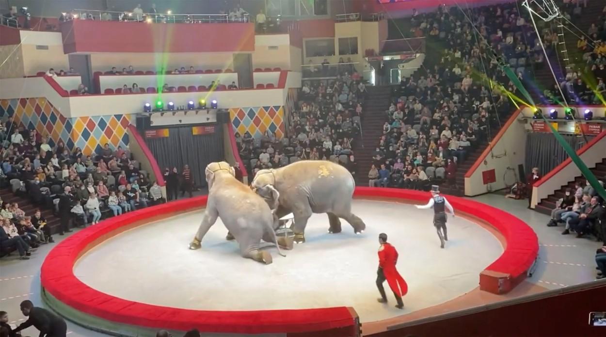 Doi elefanți s-au luat la îmbrâncit și au fost aproape de a strivi părinți cu copii, la un spectacol din Rusia