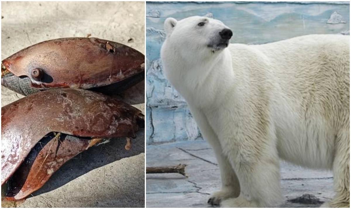 Un urs polar a murit într-o grădină zoologică din Rusia